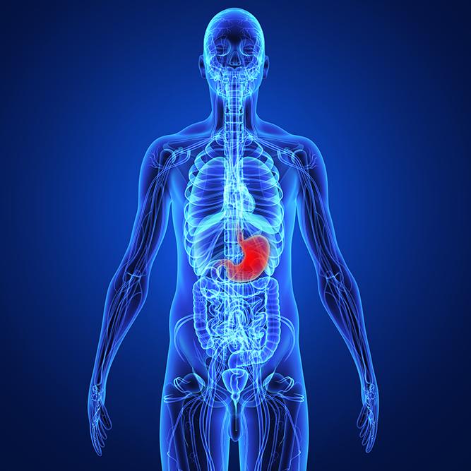 肺がん円グラフ